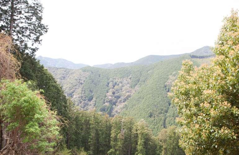 和歌山県、紀州の山の映像
